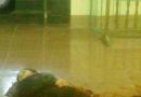Phú Thọ : Chồng đâm chết vợ ngay tại tòa án khi đang làm thủ tục ly hôn.