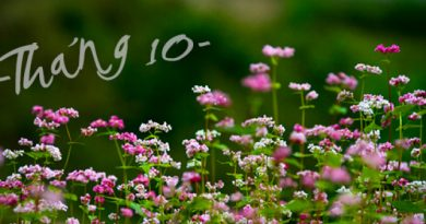 tu-vi-thang-10-cung-song-tu