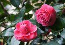 Loài hoa may mắn năm 2018 giúp Song Tử , Bảo Bình và Thiên Bình tỏa sáng