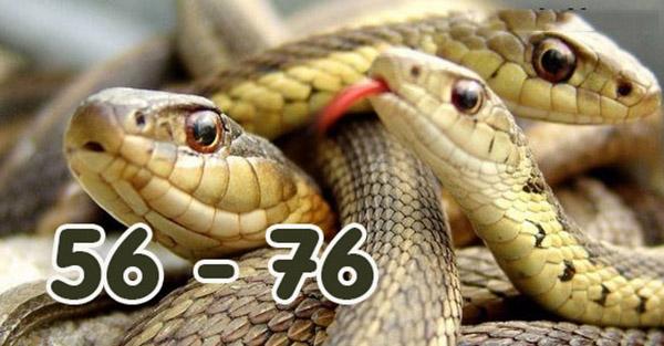 Mơ thấy rắn đánh con gì là chuẩn nhất