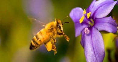 Chiêm bao thấy con ong điềm báo gì và nên đánh con xổ số nào