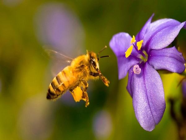 mo-thay-con-ong