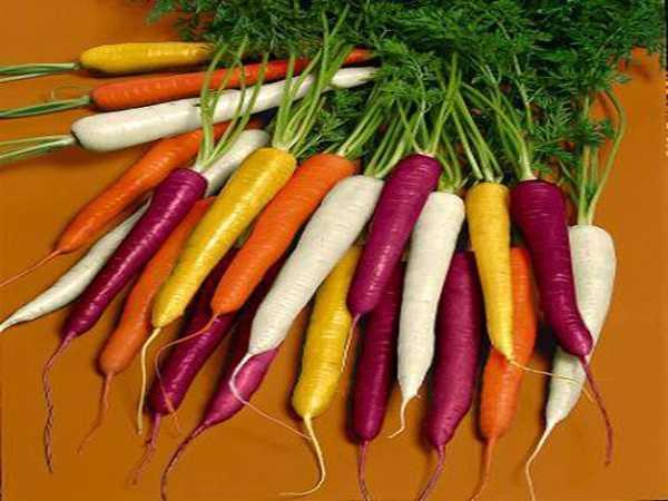 Nằm mơ thấy củ cà rốt đánh lô tô miền bắc
