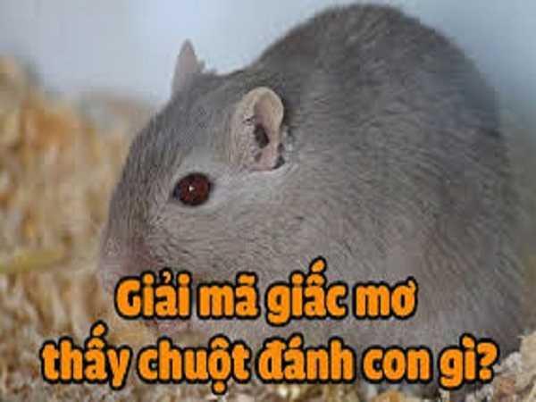 Con số may mắn dự đoán kqxsmb khi mơ thấy chuột