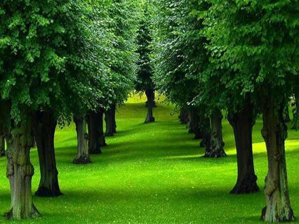 Mơ thấy cây cối là điềm báo lành hay dữ?