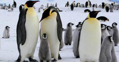 Luận giải ý nghĩa giấc mơ thấy chim cánh cụt nên đánh số nào may mắn?