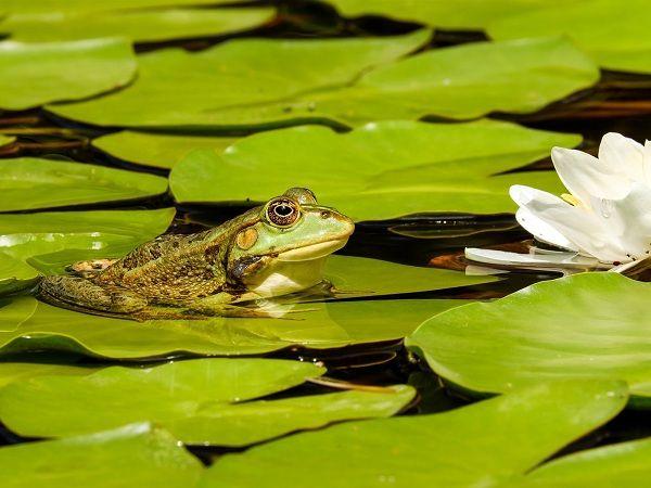 Mơ thấy ếch là điềm báo lành hay dữ?