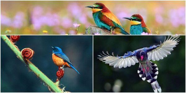 mơ thấy bắt được chim